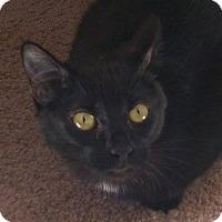 Adopt A Pet :: Rose - Chula Vista, CA