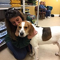 Adopt A Pet :: Henry - Greensboro, MD