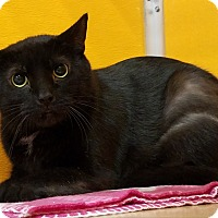 Adopt A Pet :: Vader - Elyria, OH