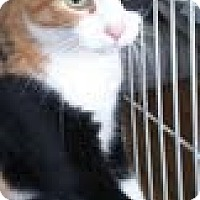 Adopt A Pet :: Gina - Modesto, CA