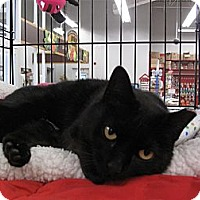Adopt A Pet :: Sweetheart - Port Republic, MD