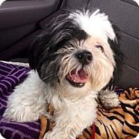 Adopt A Pet :: Rocco - Oceanside, CA