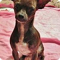 Adopt A Pet :: XROSCO - AUSTIN, TX