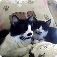 Adopt A Pet :: Beardsley - Chandler, AZ