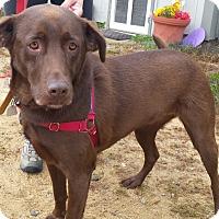 Adopt A Pet :: Hannah - Franklin, NH