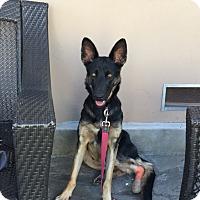 Adopt A Pet :: Faith - West LA, CA