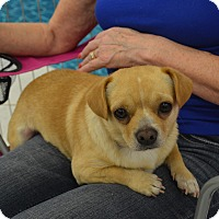 Adopt A Pet :: Max2 - Lodi, CA