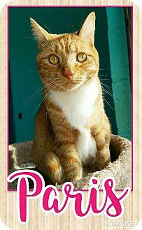 Domestic Mediumhair Cat for adoption in Edwards AFB, California - Paris