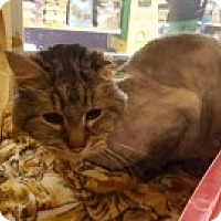 Adopt A Pet :: Simon - McHenry, IL
