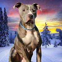 Adopt A Pet :: ROMAN - Fairfield, CA