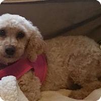 Adopt A Pet :: Jodie - Cedar Rapids, IA