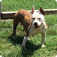 Adopt A Pet :: Lucy - Salisbury, NC