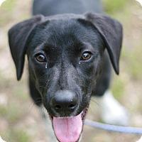 Adopt A Pet :: Dee - Attalla, AL