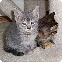 Adopt A Pet :: Female Kittens - Chicago, IL