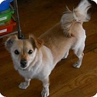 Adopt A Pet :: Micah - dewey, AZ