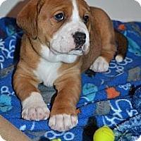 Adopt A Pet :: Kate - Danbury, CT