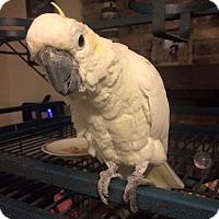 Adopt A Pet :: Casey - Burleson, TX