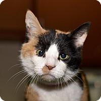 Adopt A Pet :: Marta - Medina, OH