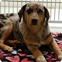 Adopt A Pet :: Smokey - Avon, NY