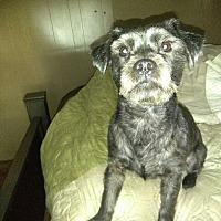 Adopt A Pet :: Noah - Powder Springs, GA