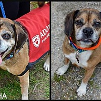 Adopt A Pet :: Kymo & Mocha - Spring Lake, NJ