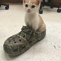 Adopt A Pet :: Chikorita - Acworth, GA