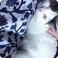 Adopt A Pet :: Regina - Toronto, ON