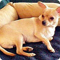 Adopt A Pet :: Digger - Toronto, ON
