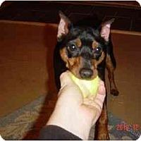 Adopt A Pet :: OZZY - Springvale, ME