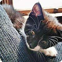 Adopt A Pet :: Skeeter - Walnut, IA