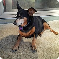 Adopt A Pet :: Milly - Creston, CA
