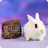 Adopt A Pet :: Phantom - Marietta, GA