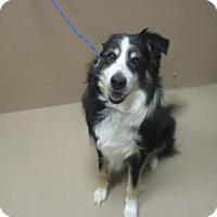 Adopt A Pet :: HERBERT - Reno, NV
