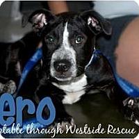 Adopt A Pet :: Aero - Fresno, CA