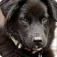 Adopt A Pet :: Huxley - Hastings, NY