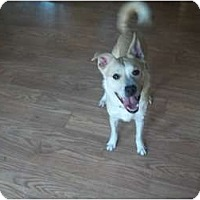 Adopt A Pet :: *Courtesy Listing* Rowan - Grand Rapids, MI