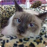 Adopt A Pet :: Reese - Chesapeake, VA