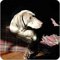 Adopt A Pet :: Echo - Attica, NY