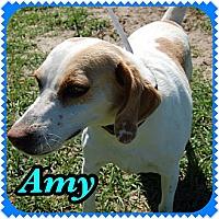 Adopt A Pet :: Amy - Williston, FL