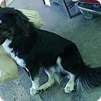 Adopt A Pet :: Buddy - Jacksboro, TN