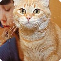 Adopt A Pet :: Sienna - Irvine, CA