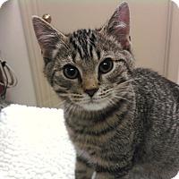 Adopt A Pet :: Jackson - Troy, OH