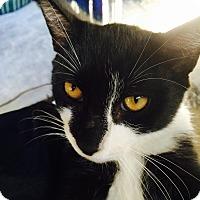 Adopt A Pet :: Bootsie - Riverhead, NY