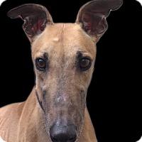 Adopt A Pet :: Ryan - Swanzey, NH
