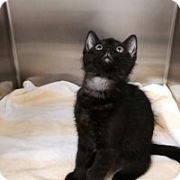 Adopt A Pet :: Norman! - McDonough, GA