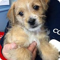 Adopt A Pet :: Reba - Strasburg, CO