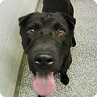 Adopt A Pet :: Vinnie in OK - Mira Loma, CA