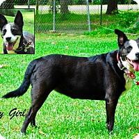 Adopt A Pet :: Pretty Girl - Daleville, AL