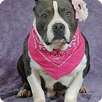 Adopt A Pet :: Mia - Lawrenceville, GA