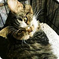 Adopt A Pet :: Kolumbyne - N. Billerica, MA